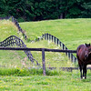 Central Banker stands in his paddock at McMahon Thoroughbred Farm June 11, 2021 in Stillwater, N.Y. . Photo by Skip Dickstein