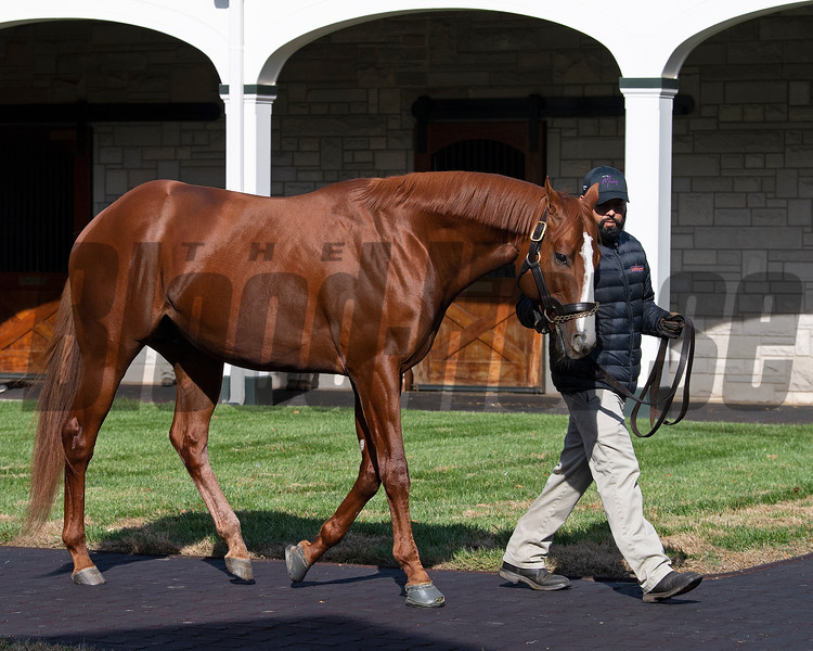 Lord Nelson at<br /> Spendthrift<br /> on  Nov. 8, 2019 Spendthrift in Lexington, KY.