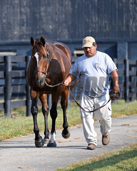Ocean Goddess (both in foal to Medaglia d'Oro) are owned by the Nygaards and boarded at Chesapeake Farm near Lexington, Ky. on Oct. 19, 2016.