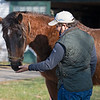 Conrad Bandoroff gives Serena's Song a Mrs. Pastures' cookie. <br /> Conrad Bandoroff and Serena's Song at Denali Stud near Paris, Ky on Jan. 21, 2021.