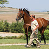 Victory Gallop at Karacabey Stud, Turkey, on July 21, 2012<br /> Photo by Michele MacDonald