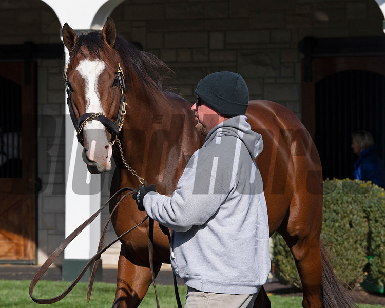 Maximus Mischief at<br /> Spendthrift<br /> on  Nov. 8, 2019 Spendthrift in Lexington, KY.