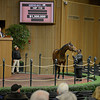 Caption: Hip 110 Nereid, broodmare prospect, consigned by Winter Quarter Farm, agent, brings $1.3 million and purchased by Lane Seliger.<br /> Keeneland January sale at Keeneland in Lexington, Ky. on Jan. 7, 2013.<br /> KeeJan2013 Sales MonOrigs1 image965<br /> Photo by Anne M. Eberhardt