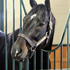 Pioneerof The Nile WinStar Farm Chad B. Harmon
