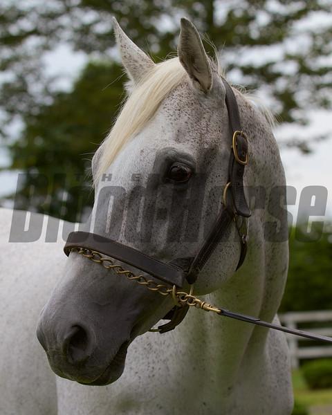 Silver Charm at the JBBA's Shizunai Stallion Station in June 2013 in Japan.<br /> Kate Hunter Photo