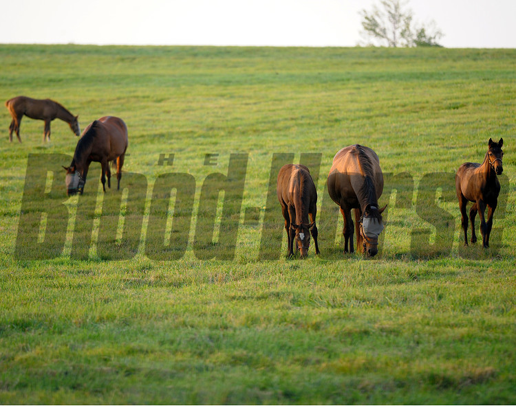 Caption: mares and foals<br /> Horse scenes at a Central Kentucky farm on August 4, 2010.<br /> Origs1 image 579<br /> Photo by Anne M. Eberhardt