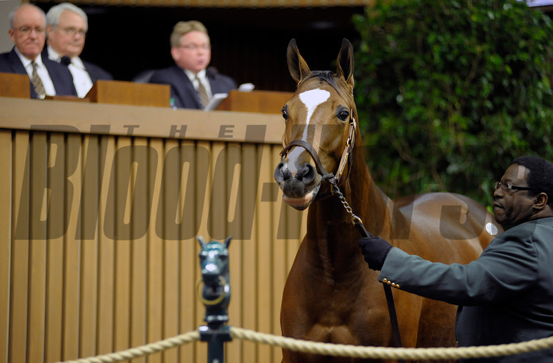 Caption: Hip 96 Plum Pretty from Taylor Made Sales Agency brings $4.2 million.<br /> Horses sell at the Keeneland November sales on Nov. 6, 2012, in Lexington, Ky.<br /> Keeneland MonRing1 image145<br /> Photo by Anne M. Eberhardt