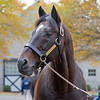 Fusiachi Pegasus at Ashford Stud near Versailles, Ky. Stallion open houses in Central Kentucky.
