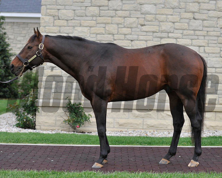 Adena Springs stallion Ghostzapper at the Paris, KY facility.<br /> Photo by Mallory Haigh