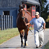 Rigoletta (in foal to Medaglia d'Oro) are owned by the Nygaards and boarded at Chesapeake Farm near Lexington, Ky. on Oct. 19, 2016.