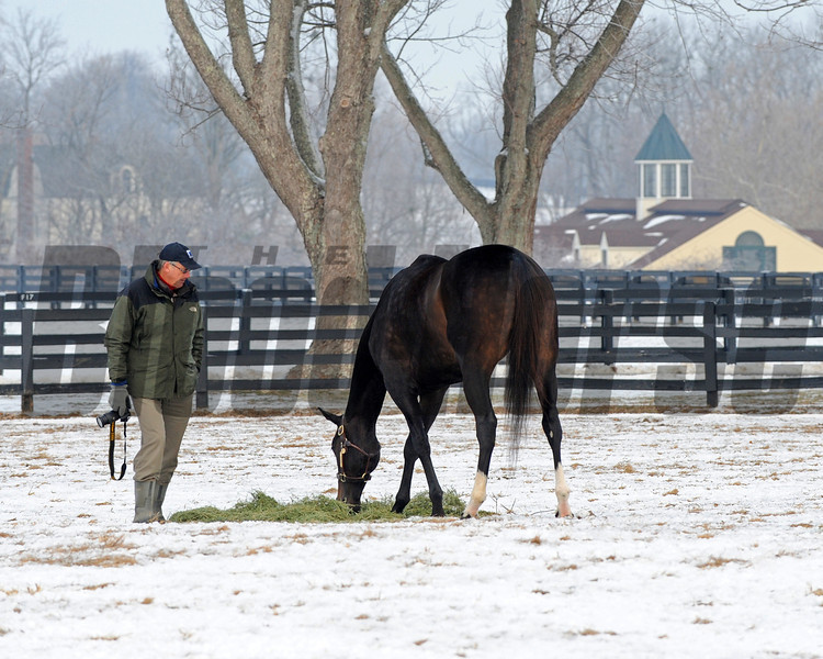 Caption: trainer John Shirreffs with his camera and Zenyatta in paddock.<br /> Zenyatta goes out to her paddock on December 20, 2010, at Lane's End Farm near Versailles, Ky.<br /> ZenyattaDec2010 Origs 1 image320<br /> Photo by Anne M. Eberhardt