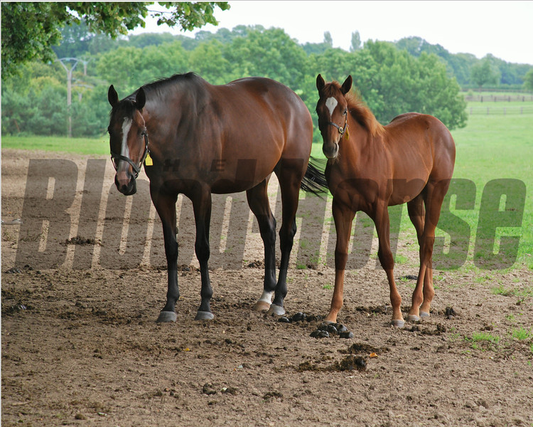 Photo of mother and foal at the  Haras Du Thenney, near Deauville.