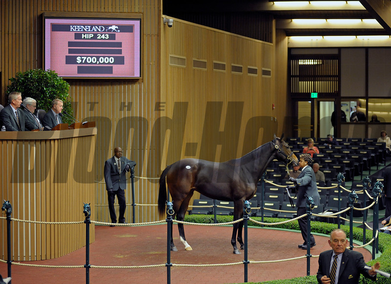 Hip 243 Samantha Nicole, a yearling full sister to Horse of the Year Rachel Alexandra, brings $700.000 from Barbara Banke, owner of Stonestreet Stables and home of Rachel Alexandra. Consigned by Gainesway, agent for Dolphus Morrison, and raised at Dede McGehee's Heaven Trees Farm near Lexington.<br /> Hip243 image 401
