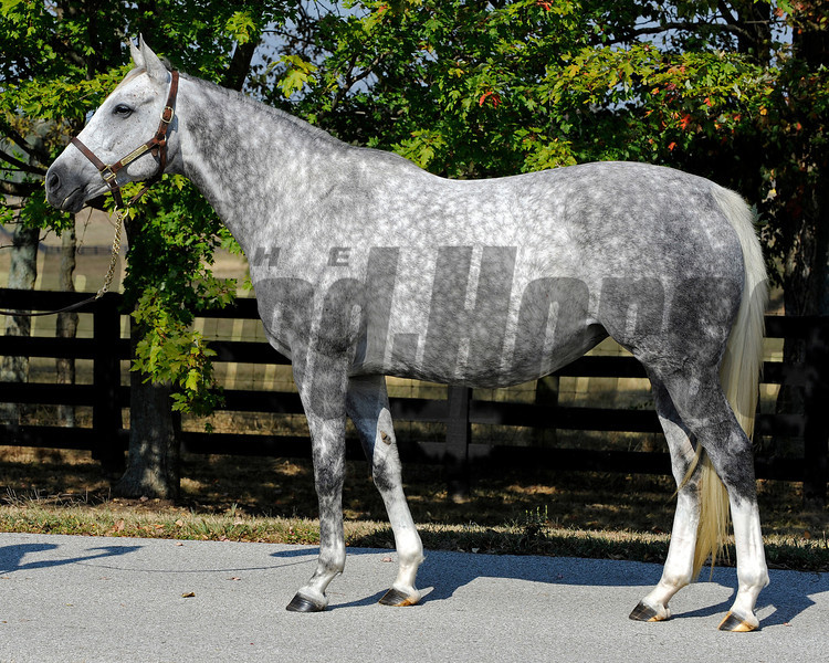Caption: <br /> Octave in foal to Bernardini at Darley's Gainsborough near Versailles, Ky. on Sept. 20, 2010.<br /> BalanceOctave image149<br /> Photo by Anne M. Eberhardt