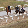 2yo fillies training. Scenes at Blackwood Stables on<br /> Feb. 25, 2020 Blackwood Stables in Versailles, KY.