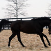 Fort Larned at Adena Springs<br /> photosbyz.com