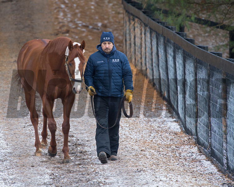 Justify with Mario Ponce at Ashford Stud on Nov. 28, 2018, in Versailles, Ky.