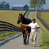Caption: <br /> Balance at the Poplar Grove division of Mill Ridge Farm near Lexington, Ky. on Sept. 20, 2010, with her handler Juan Gonzalez.<br /> BalanceOctave image2016<br /> Photo by Anne M. Eberhardt