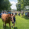 Wise Dan. & Amy with the Crowd  @ Old Friends in Gerogetow  KY July 6 2019<br /> ©JoeDIOrio/Winnningimages.biz