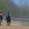 Caption: (L-R): Trendy Neve filly and Quantitativbreezin filly after galloping, <br /> Training at Silver Springs Training, part of Silver Springs Stud, near Lexington, Ky.,  on April 8, 2020 Silver Springs in Lexington, KY.