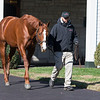 Lord Nelson at Spendthrift<br /> Keeneland November Sale 2018