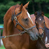 Ginger Punch with her 2012 Manhattan Cafe colt.