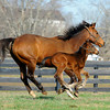 Caption: <br /> Lotta Kim produced a full sister to Rachel Alexandra on Feb. 27, 2011, at Dr. Dede McGehee's Heaven Trees Farm near Lexington, Ky. Photographed on March 12, 2011, the Medaglia d'Oro filly is owned by Dolph Morrison. for Throughthelensblog.com, Blood-Horse and bloodhorse.com<br /> LottaKim Origs1 image 990<br /> Photo by Anne M. Eberhardt