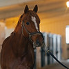 Caption: in the barn before heading outside. At 8 am Country House is lead by Juvencio Escobar to his paddock where he spends the day,  at Blackwood Stables on<br /> Feb. 27, 2020 Blackwood Stables in Versailles, KY.