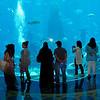 The aquarium in the Atlantis Hotel