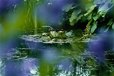 Monet's Lily Pond at Giverny 2