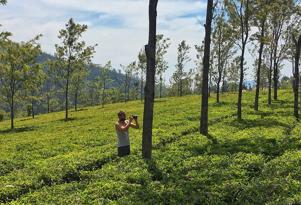 Capturing the tea plantation