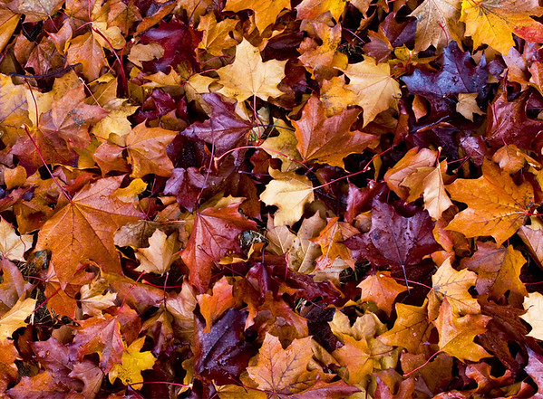 Autumn leaves II<br /> <br /> 02-202