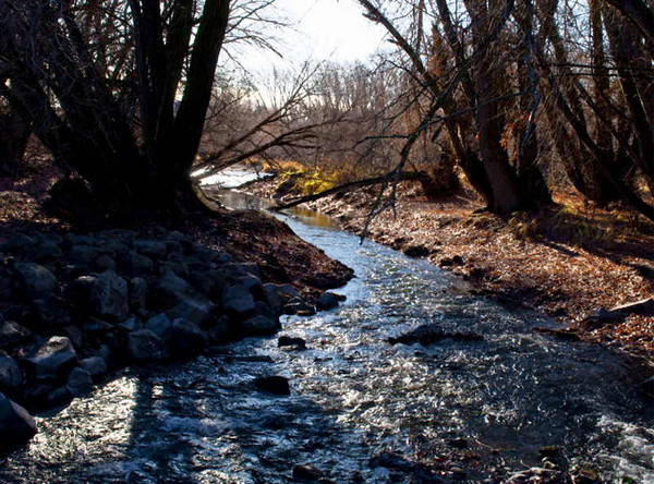 In the city park, early winter<br /> Ellensburg, Washington<br /> <br /> 02-229