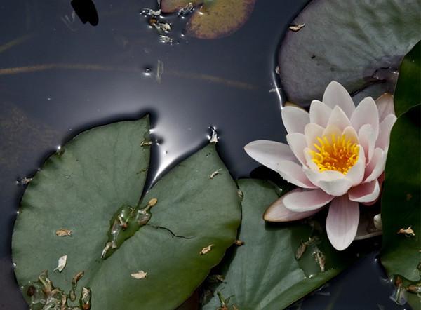 Lotus pond III<br /> <br /> 02-225
