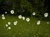 In Gabi's garden<br /> <br /> 02-269