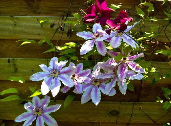 In Gabi's garden<br /> <br /> 02-252