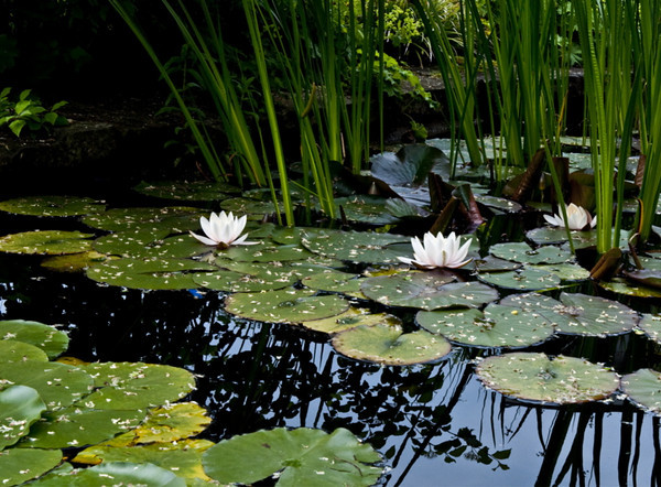 Lotus pond II<br /> <br /> 02-224