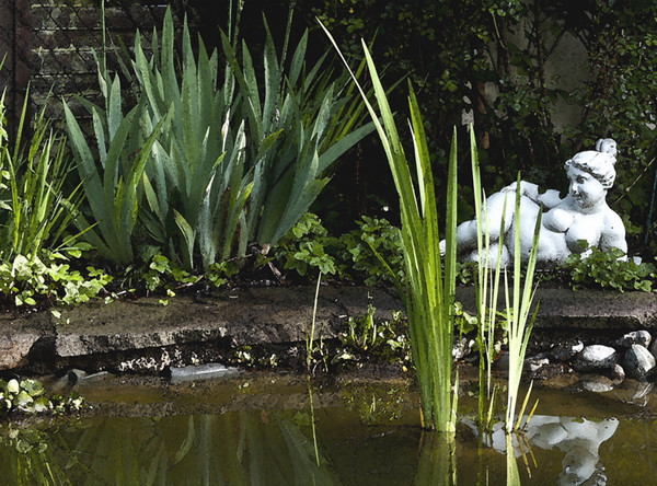 Gabi's pond<br /> <br /> 02-253