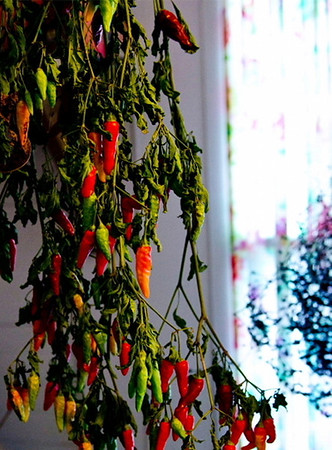 Peppers drying<br /> <br /> 01-058