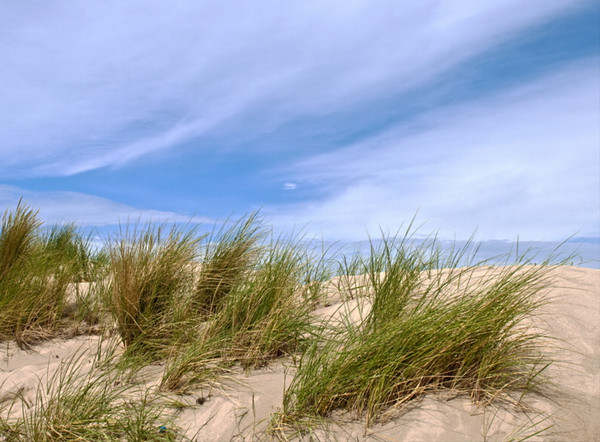 Beach grass<br /> Baltic Coast, Germany<br /> <br /> 02-222