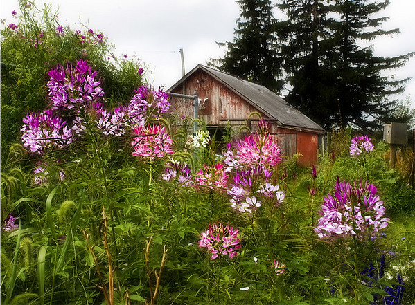 Flfowrs with barn beyond<br /> <br /> 02-209