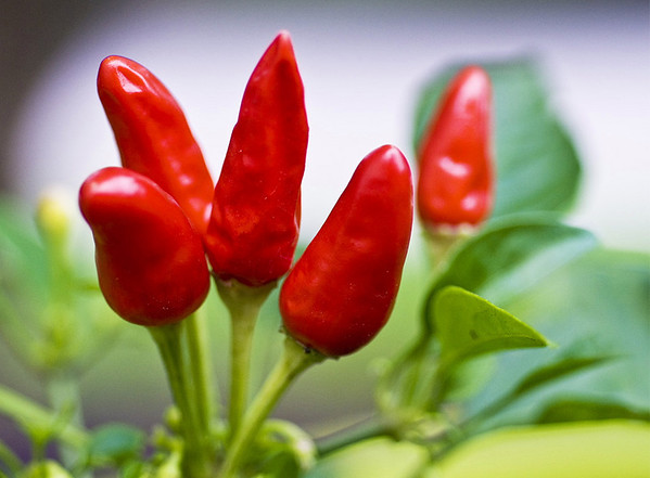 Bluffwood peppers<br /> <br /> 02-205