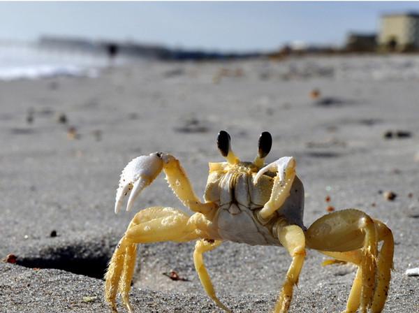 Crabby<br /> Cocoa Beach, Florida<br /> <br /> 02-233