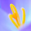 KrokusKrokus_20822c_JD_LEO0217WIc_JD_LEO0217WI
