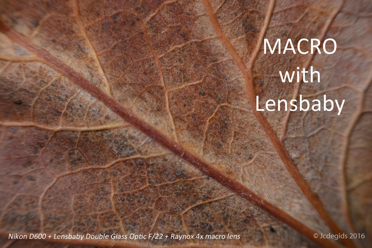 MACRO_with_Lensbaby_DGO_F22+Raynox_4x_lens_4175c_JD_LEO1216HE