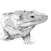 """Iguana"" (pen and ink) by George Tachtiris"