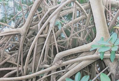 """""""Mangrove 200"""" (mixed media) by Deborah Perlman"""