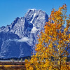 Grand Teton National Park during fall foliage in Moose, Wyoming, at turnout just below Willow Flats Overlook.