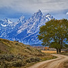 Grand Teton National Park during fall foliage in Moose, Wyoming, along Wolff Ranch RD.