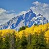 Grand Teton National Park during fall foliage in Moose, Wyoming, along Teton Park Road, south of Signal Mountain RD.